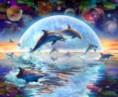 Dolphins by Moonlight