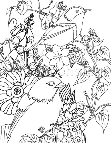 Birds coloringpage