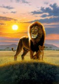 Sunset lion and cub