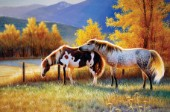 Two horses in pasture (NPI 0029)