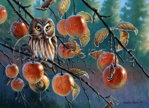 Owl with apples NPI 0076