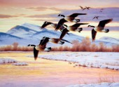 Sunrise geese in flight (NPI 0142)