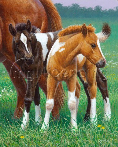 Two foals NPI 21490053