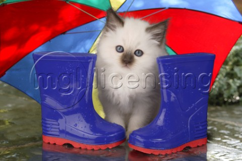 White kitten and wellies CK236