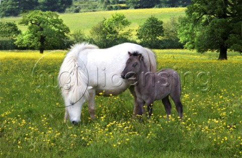 Pony and baby H102