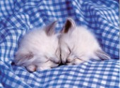 Kittens asleep (A148)