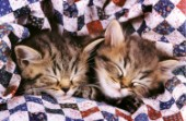 Two kittens asleep (A183)
