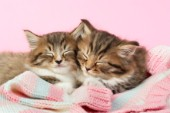 Kittens asleep on blanket (CK409A)