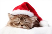 Sleeping Christmas cat (C573)