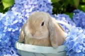 Bunny in Blue Flowers EA560