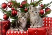 Cute Kitten Xmas Presents C607