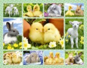 New Easter Multipic 1