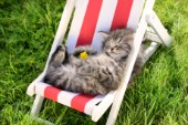 Cat Sleeping on deck Chair CK543