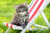 Cat on Deck Chair CK544.jpg