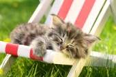 Cat Sleeping on Deckchair 2 CK545