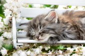 Grey Cat Sleeping on Bench