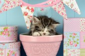 Cat in Pot CK564.jpg