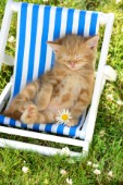 Cat Lounger 2CK576.jpg