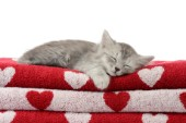 Cat Sleeping on Towels CK562.jpg