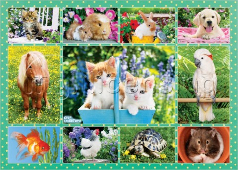 Cute Animals Montage