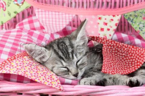 Sleeping Kitten CK690
