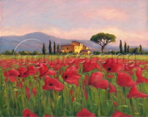 Tuscan evening poppies