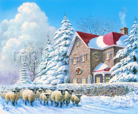 Winter passage  sheep