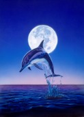 Moonlight dolphin