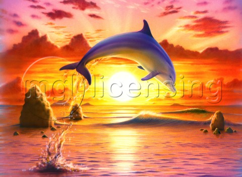 Day of the dolphin  sunset