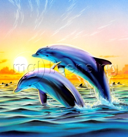Dolphin duo