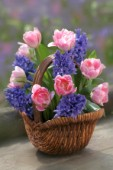 Basket of Hyacinths and Tulips