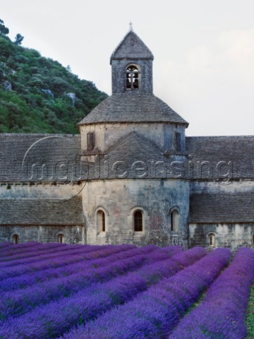 Lavander Church PR733 Variant 1jpg