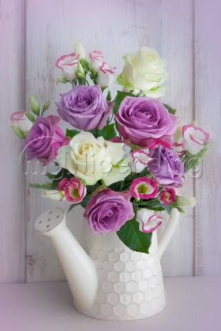 Magenta and White Roses