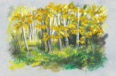 Autumn Birches.jpg