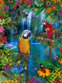 Bird Tropical Land