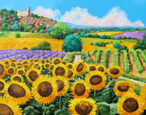 Vineyards and sunflowers in Provence