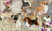 Painted Dog Multipic 2