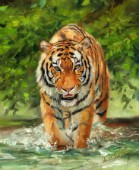 Amur TIger on Water