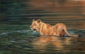 Lioness Water