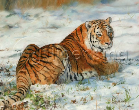 Amur Tiger  laying in snow Oil on canvas