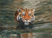 Amur Tiger Swimming. Oil on canvas.
