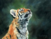 Portrit of a young Amur Tiger. Oil on canvas.