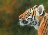 Oil painting on canvas of a young Amur Tiger looking to the left.