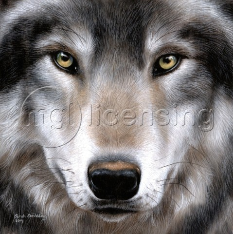Grey wolf portrait