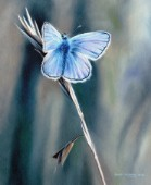 Oil on canvas painting of a common blue butterfly