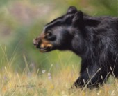Black Bear Walking