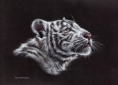 White tiger cub drawn in pastel pitt pencils.