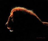 African Lion at twilight painted in oil paints on canvas