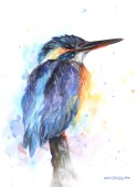 Kingfisher painted in watercolours