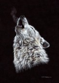 WhiteWolfHowling